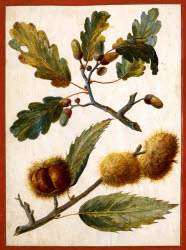 2006BF9606