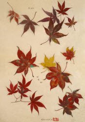 2006BC0207